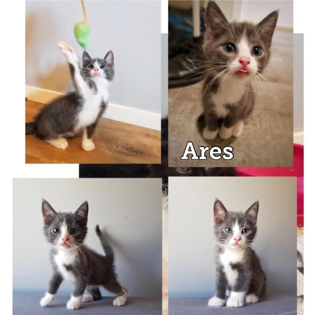 Ares0819.jpg